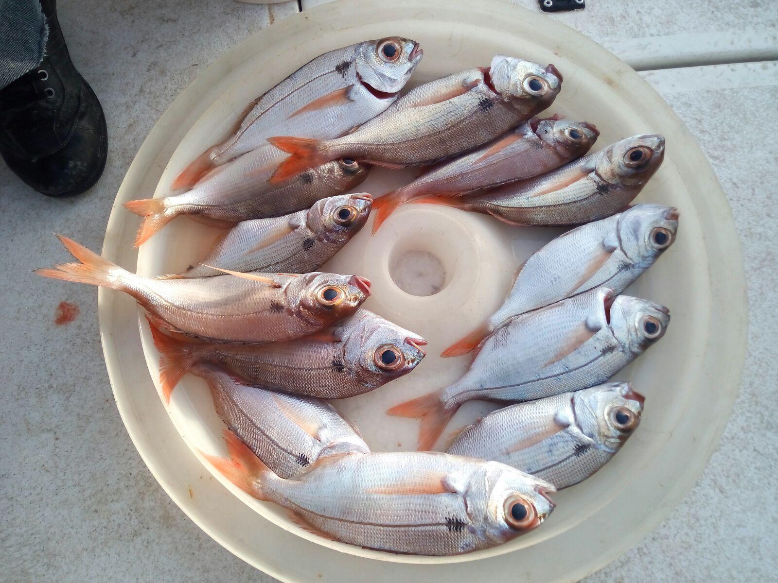 11 Il cesto dei pesci