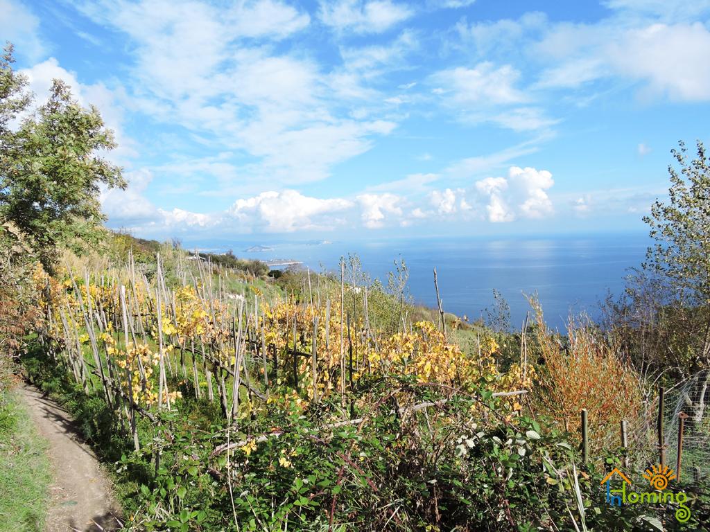 11 Piano liguori con lo sfondo del golfo di Napoli