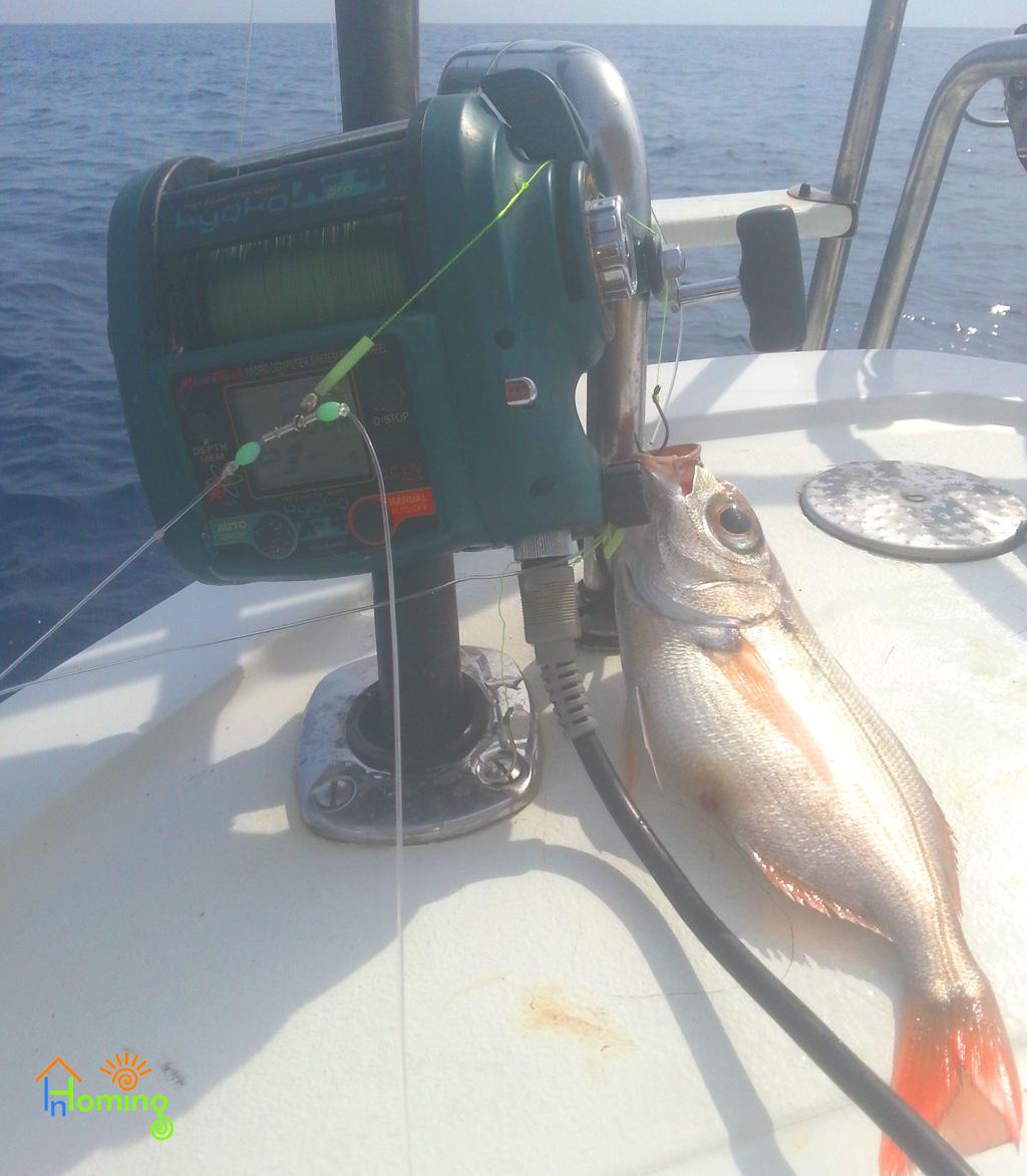Pesca sportiva Ischia: Mulinello elettrico con occhione